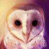owlsomniac